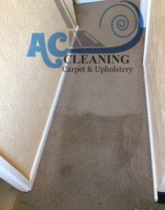 clean hallway carpet